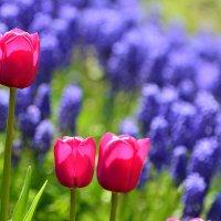 О красоте весенней... :: Тамара Бедай