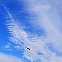 Птица в облаках. :: Светлана Хращевская