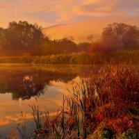 misty morning :: Elena Wymann