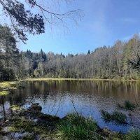 Озеро Мальково :: Елена Павлова (Смолова)