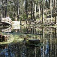 мостик и его обитатели в Сергиевке :: Елена