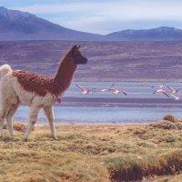 Перу. Национальный заповедник Салинас и Агуада Бланка (белая вода). :: Svetlana Galvez