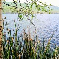 На озере :: Oksana ***