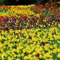 Цветочные ковры мая... :: Тамара Бедай