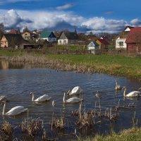 Лебединое озеро :: M Marikfoto