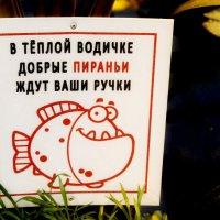 Добро пожаловать! :: Vladimir Semenchukov