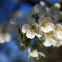Иногда весна радует :: Людмила Торварт