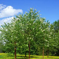 Весна в парке Садовники :: Alex Sash