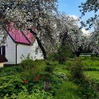 Panoramio garden :: silvestras gaiziunas gaiziunas