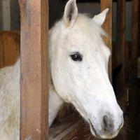 К лошадкам в гости... :: Любовь С.