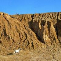 конь или  конь (но железный) :: Ирэна Мазакина