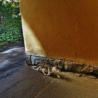 Питерская кошка. :: Vladimir Semenchukov