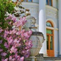 Сирень у Елагина Дворца... :: Sergey Gordoff