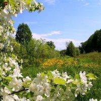 Один раз в год сады цветут... :: владимир тимошенко