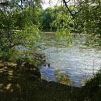 У реки...май... :: Galina Dzubina