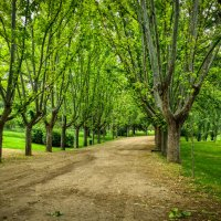 В парке :: Валерий Т