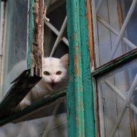 Страшнее кошки зверя нет ) :: Gala *