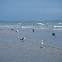 Балтика, пляж, чайки, ---ностальгия!!! :: Валентина Папилова