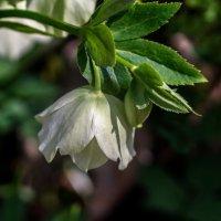 Цветок мая :: gribushko грибушко Николай