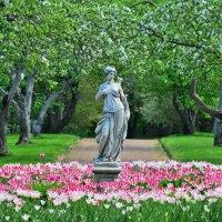 В цветущих садах усадьбы Коломенское ... :: Константин Анисимов