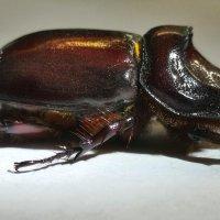 Всем понятно какой жук :: NICKIII Михаил Г.
