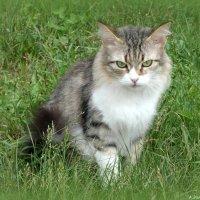 И кошки хочут чтобы лето не кончалось! :: Андрей Заломленков