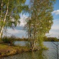 С берёзой на краю :: Николай Гирш
