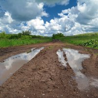 И тёплый дождь июня нам грибы пророчит... :: Андрей Заломленков