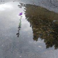 Неделю дождь. Покой и суета.... :: TAMARA КАДАНОВА