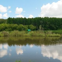 В Русалчин Велик день держитесь дальше от воды! :: Андрей Заломленков