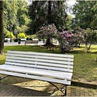 В парке. :: Валерия Комова