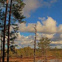 Фрагмент весеннего леса... :: Татьяна Ивановна