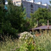 Городские цветы ... :: Анатолий. Chesnavik.