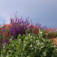 Полевые цветы... :: Павел Тюпа