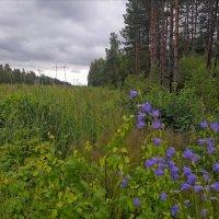 я во Владимирских лесах :: Любовь