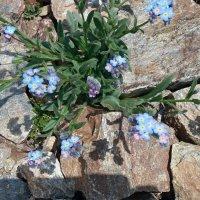 Цветы и тени :: Galina Solovova