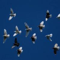 Летите голуби, летите! :: Светлана Карнаух