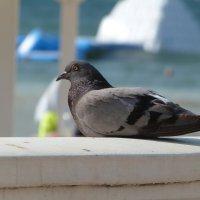 Птица :: Инга Егорцева