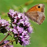 Гармония флоры и фауны :: Владимир Манкер