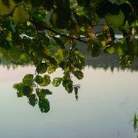 Кружева листвы :: Лихо Одноглазое