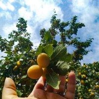 новый урожай :: Анастасия Верушкина