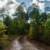 В лесу... :: Оксана Галлямова