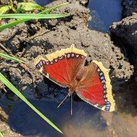 Бабочка! :: Марина Валиуллина