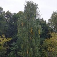 Осень близко :: Евгения
