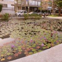 басейн в центре города Бат-Ям( Израиль) :: Пётр Беркун