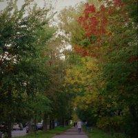 Осень :: ЕЛЕНА КУКШЕВА