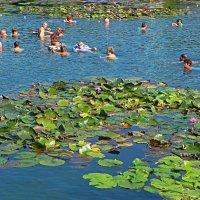 Термальное озеро Хевиза - источник здоровья :: Светлана Хращевская
