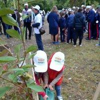 Нужно  посадить дерево  за свою жизнь. :: Михаил Столяров