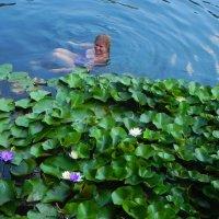 Термальное озеро Хевиза :: Светлана Хращевская