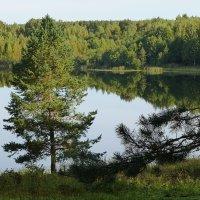 Озеро Светлояр :: Лидия Бусурина
